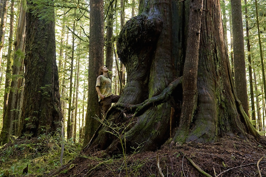 BC old growth forest