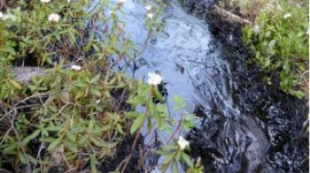 Cold Lake CNRL bitumen oil spill is ongoing
