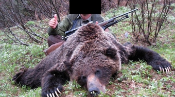 grizzly bear trophy hunt bc emails government emails FOI investigation Prystupa