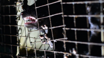 fur farm, mink, animal cruelty, B.C. fur farm, fur industry, fur trade