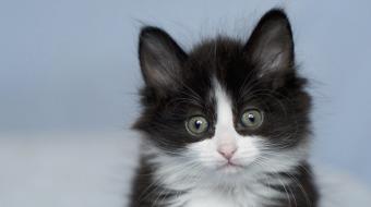Kitten photo by Tanja Aelbrecht